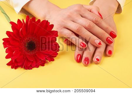 Female hands and red gerbera. Beautiful red gerbera next to woman manicured hands on yellow background. Skin and nails treatment.