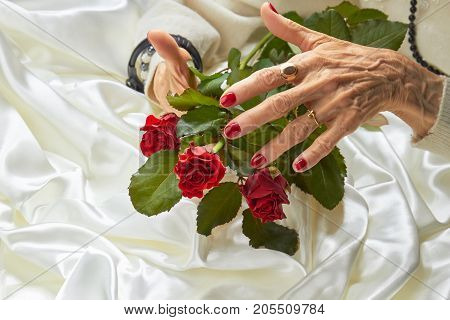 Roses in old woman well-groomed hands. Elderly woman with beautiful red manicure holding red roses on white silk background.