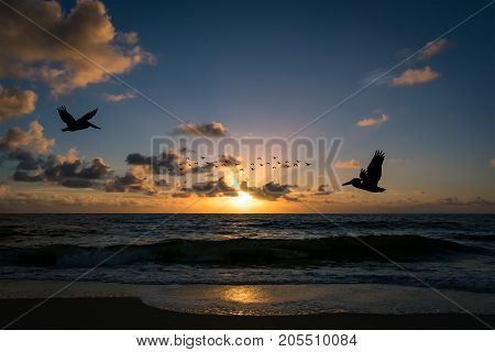 silhouettes of pelicans and birds flying over the ocean on a warm summer morning just after sunrise