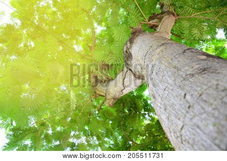 Abstract blur image of big tree in the garden,natural or environmental concept.