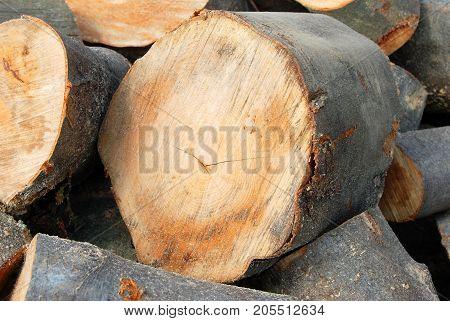 Stacked Log, Close Up