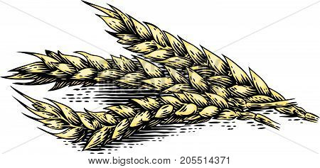 Drawing of three whole spikelets of wheat