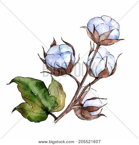 Wildflower cotton flower in a watercolor style isolated. Full name of the plant: cotton. Aquarelle wild flower for background, texture, wrapper pattern, frame or border.