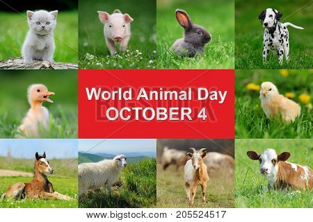 4th October. World animal day. Animal collage