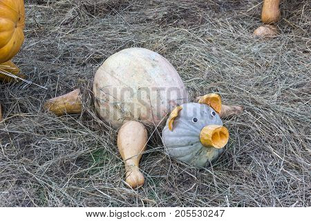 Piglet Made From Large Ripe Pumpkins.