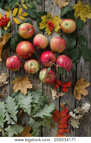 Red apples scattered on the old wooden table with autumn leaves in light