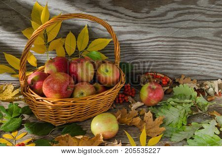 Apples in wicker basket on a background of autumn leaves and old boards on the table