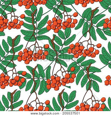 Hand drawn seamless pattern with red rowan, ash tree berries and green leaves, sketch vector illustration on white background. Red rowan berries and leaves seamless pattern, backdrop, textile design