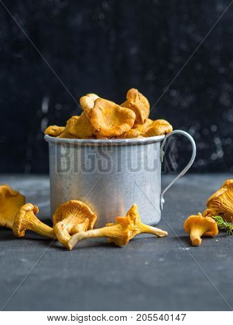 fresh chanterelles in a metal mug on a dark background. Composition with wild mushrooms. copy space