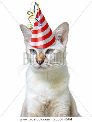 Funny party animal concept of a cat wearing a birthday hat, isolated on a white background
