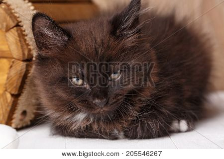 Black kitty cat lies and almost fell asleep. Calm concept. close up view
