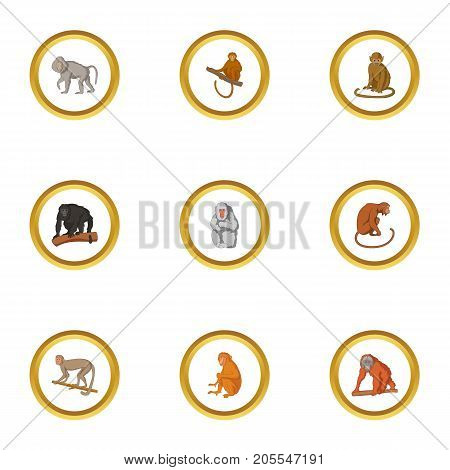Primate icons set. Cartoon style set of 9 primate vector icons for web design