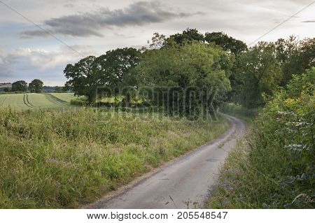 A Cotswold lane with Oak and Ash trees Gloucesterhire England.