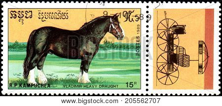 R.P. KAMPUCHEA - CIRCA 1989: A stamp printed in R.P. Kampuchea shows a Vladimir heavy draught horse, series breeds of horses