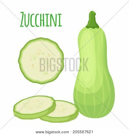 Fresh zucchini squash, vegetarian vegetable. Whole and slices. Made in cartoon flat style. Vector illustration