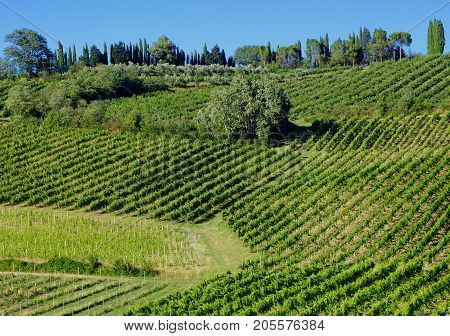 Country landscape between Imola (Bologna) and Riolo Terme (Ravenna Emilia Romagna Italy) at summer. Vineyards