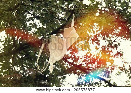 discarded bra hanging from tree branch. feminism or freedom concept. with sun flare.