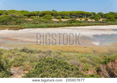 Landscape at coast with green vegetation and dry seabed
