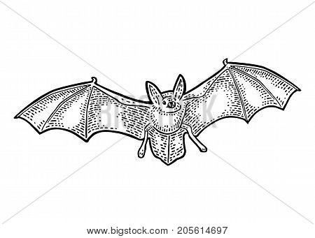 Bat flying with scary face. Vector black vintage engraving illustration. Isolated on white background. For invitation and poster Halloween.