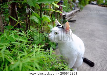 white cat hiding in the tree and sitting on the floor