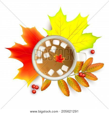 Banner with maple autumn leaves and rowan branches with ashberry and cup of coffee with marshmallow isolated on a white background. Autumn maple leaf and rowan branches with ashberry and cup of coffee with marshmallow isolated on a white background. Vecto