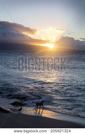 ocean in maui during sunset with dogs running around