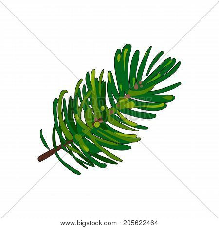 Hand drawn fir tree twig, branch, spruce, Christmas decoration element, sketch style vector illustration on white background. Single fir tree twig, branch, hand drawn sketch style illustration