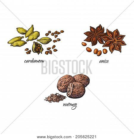 vector flat cartoon sketch hand drawn Spices, seasoning, flavorings and kitchen herbs set. Star anise with seeds, nutmeg and cardamom. Isolated illustration on a white background