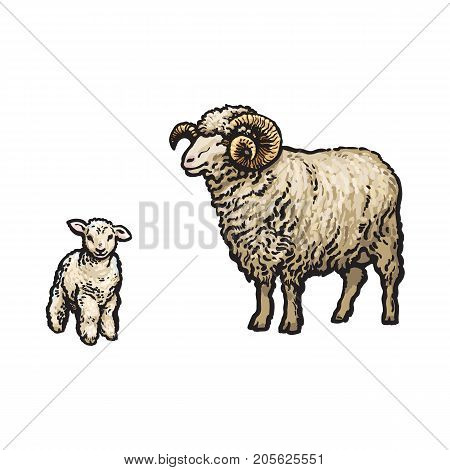 vector sketch cartoon style horned ram and lamb. Isolated illustration on a white background. Hand drawn animal with big twisted horns. Cattle farm cloven-hoofed livestock animal wool products design