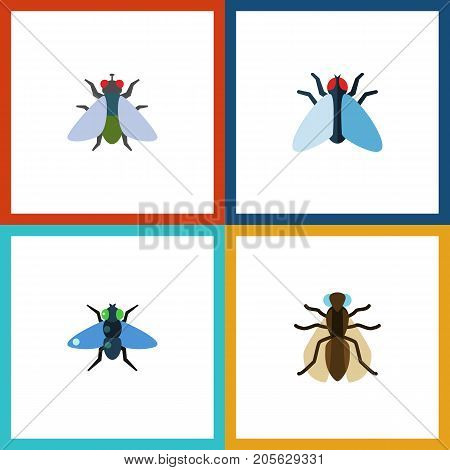 Flat Icon Buzz Set Of Dung, Fly, Housefly And Other Vector Objects