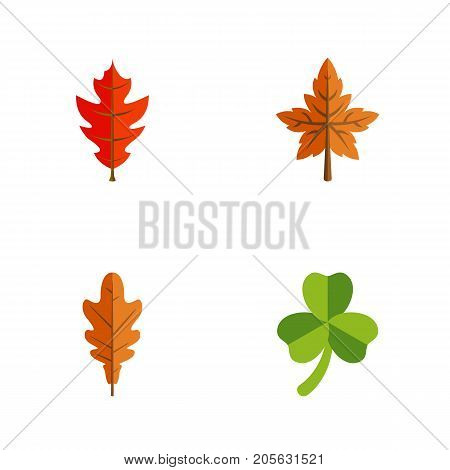 Flat Icon Leaves Set Of Leaf, Linden, Alder And Other Vector Objects