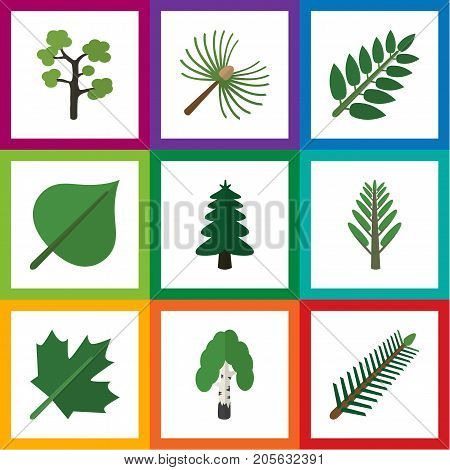 Flat Icon Bio Set Of Oaken, Jungle, Hickory And Other Vector Objects