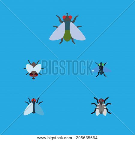 Flat Icon Fly Set Of Fly, Housefly, Gnat And Other Vector Objects