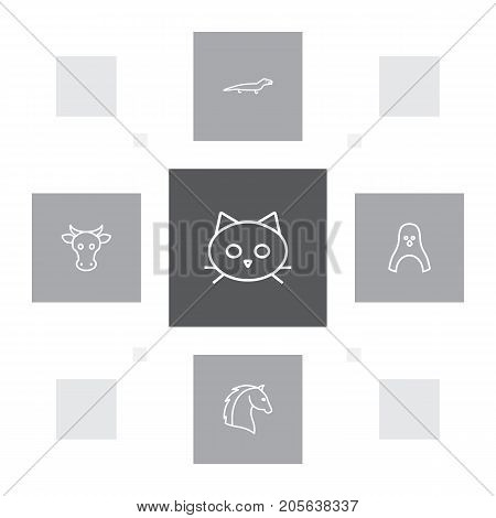 Collection Of Lizard, Cat, Cow And Other Elements.  Set Of 5 Zoology Outline Icons Set.