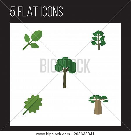Flat Icon Nature Set Of Foliage, Evergreen, Alder And Other Vector Objects