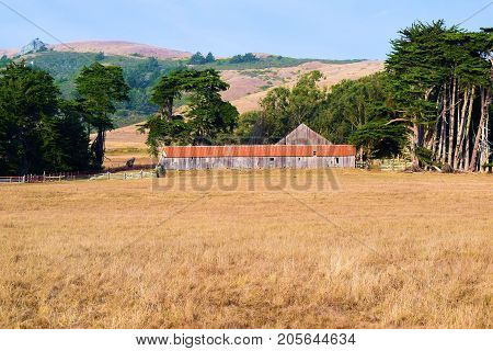 Forgotten landscape including a haunting image of a collapsing wooden barn taken at a rural field in Sonoma County, CA