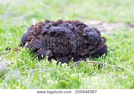 cow dung . In the park in nature