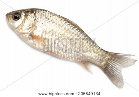 goldfish on a white background . Photos in the studio