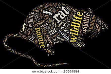 Wordcloud of rat