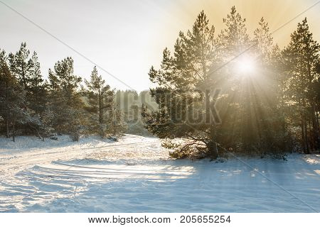 A beautiful snowy forest scene with a snowy road
