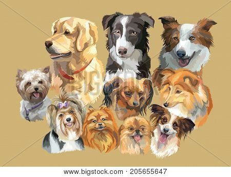 Set of colorful vector portraits of dog breeds ( golden retriever border collie; toy Terrier papillon SheltieYorkshire Terrier Biewer terrier small pomeranian Pekingese) isolated on beige background