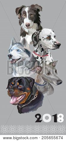 Vertical postcard with dogs of different breeds (Rottweiler; border collie; Italian Greyhound; Dalmatian siberian husky)on grey background. 2018 year of dog.