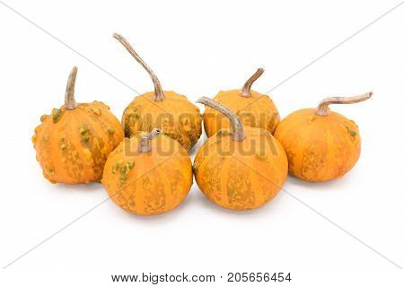 Group Of Six Small Round Warty Ornamental Gourds