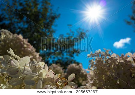 high Sun is shining over white flowers.