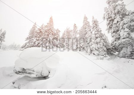 Everything Is Covered With Snow. Snowy Trees In The Forest. Christmas Snowy Morning In The Woods. Ch