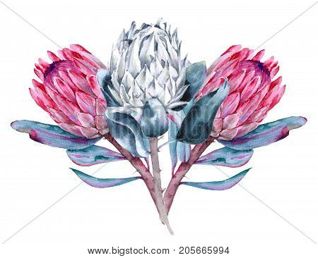 Bouquet of flowers protea. Isolated on white background. Watercolor illustration.