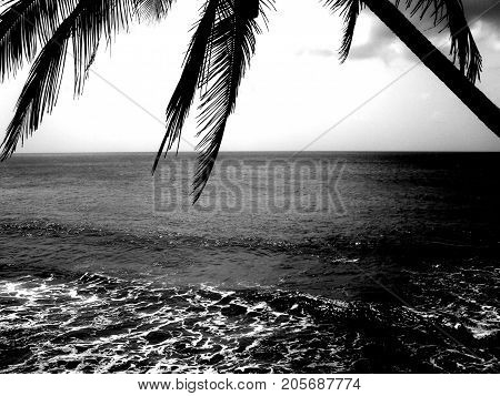 Calmness of a sea framed by a palm tree