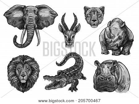 Wild African animals sketch icons. Vector isolated set of elephant tusk, antelope or gazelle and cheetah panther, savanna lion or tiger and alligator crocodile with hippopotamus or rhinoceros for zoo
