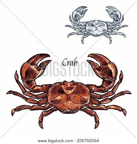 Crab or lobster sketch. Vector isolated icon of sea or ocean crayfish crustaceans of marine fauna species animal with claws for seafood restaurant sign, fishing club or fishery market