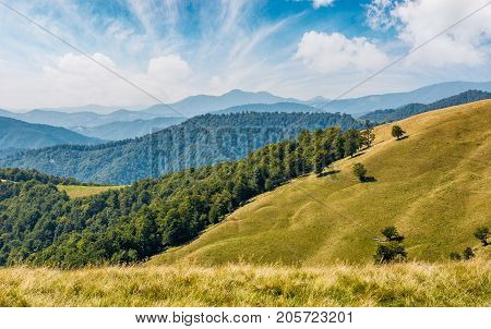 Beautiful Alpine Grassy Meadow In Carpathians